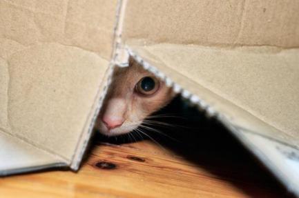 esconde